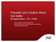 bengalklubben 2009 giveaway (pdf)