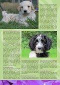 1e artikel - Trimsalon Harig - Page 3