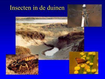 Insekten in de duinen