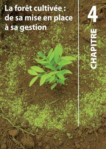 La forêt cultivée : de sa mise en place à sa gestion ... - Province sud