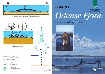 Fiskeri i Odense Fjord - Hvor, hvornår og hvordan?