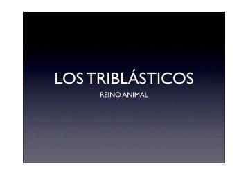 LOS ANIMALES TRIBLÁSTICOS