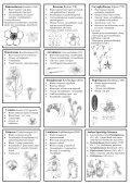 Overzicht Plantenfamilies Latijn.pdf - SJOC - Nederlandse ... - Page 2