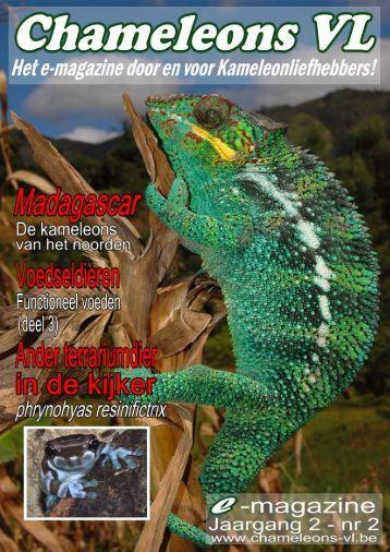 02 - Chameleons Vlaanderen