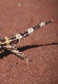 Reptielen zoeken in - Lacerta - Page 6