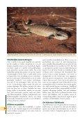 Reptielen zoeken in - Lacerta - Page 7