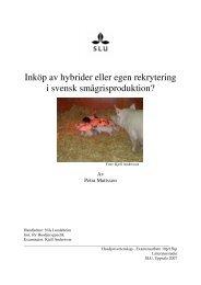 Inköp av hybrider eller egen rekrytering i svensk ... - Svenska Pig