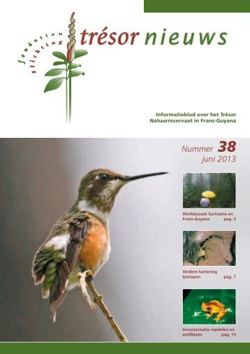 Nummer 38 juni 2013 - Trésor Rainforest