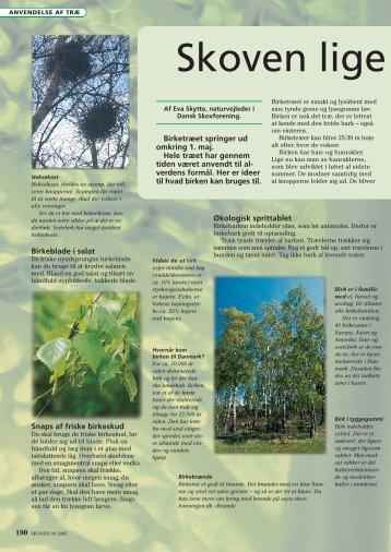 Læs mere om birk - Dansk Skovforening