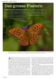 Das grosse Flattern. Waldtagfalter und andere Schmetterlinge im Wald