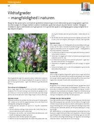 Vildtafgrøder – mangfoldighed i naturen - DLF-TRIFOLIUM Denmark