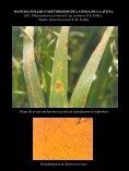 Drechslera avenae - Enfermedades en Cultivos - Page 7