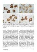Svampe 43 side 1-32 - Page 5