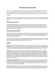 Bearded Dragon Care Sheet - Shires Veterinary Practice