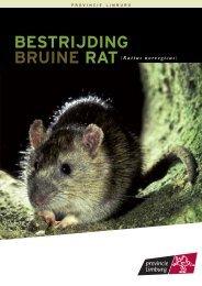 bestrijding bruine rat - Provincie Limburg
