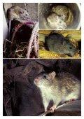 bestrijding bruine rat - Provincie Limburg - Page 5