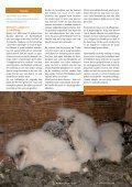 2009 - Werkgroep Kerkuilen - Page 7