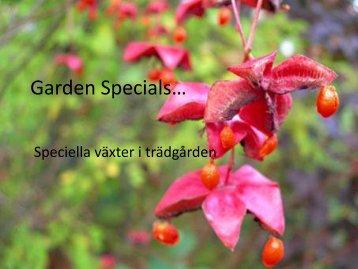 Specials - Inga