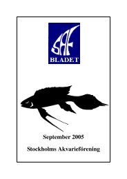 Stockholms Akvarieförening September 2005