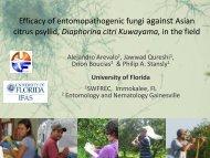 Isaria fumosorosea - University of Florida