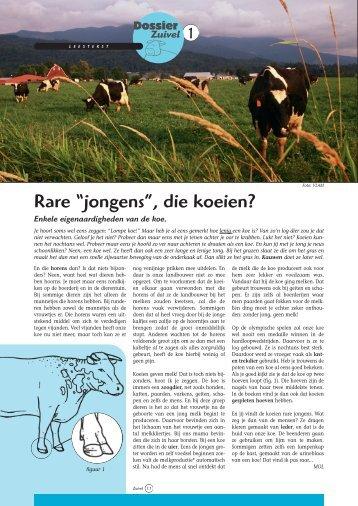 "Rare ""jongens"", die koeien? - Grasspriet"