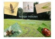 presentatie over nuttige insecten in akkerranden - SVAL