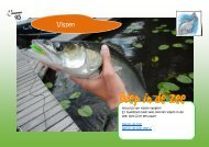Vissen - Wijzneus