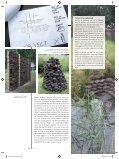 Staatsbosbeheer ziet mogelijkheden voor ... - Biodiversiteit.NL - Page 5