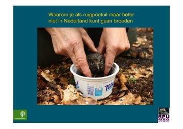 Waarom je als ruigpootuil maar beter niet in Nederland kunt gaan ...