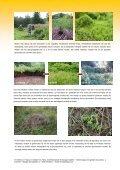 Noord-Amerikaanse Spiraeas - AlterIAS - Page 2