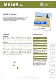 Mulan (B) - Scandinavian Seed