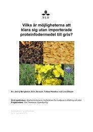 Inhemska proteinfodermedel till gris - Svenska Pig