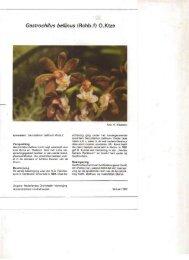 Gastrochilus bellinus (Rchb.f) - Orchideeën Vereniging Vlaanderen