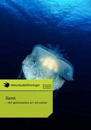 Folder Havet - Naturskyddsföreningen