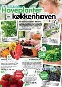 Nye lave sorter af klematis, som blomstrer - Ellengaard - Page 2