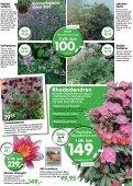 Nye lave sorter af klematis, som blomstrer - Ellengaard - Page 3