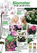 Nye lave sorter af klematis, som blomstrer - Ellengaard - Page 4
