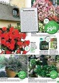 Nye lave sorter af klematis, som blomstrer - Ellengaard - Page 7