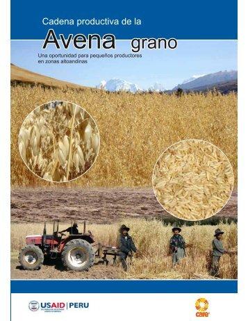 Cadena productiva de la avena grano - CARE Perú