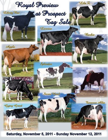 Royal Preview at Prospect Tag Sale - Holstein World Online