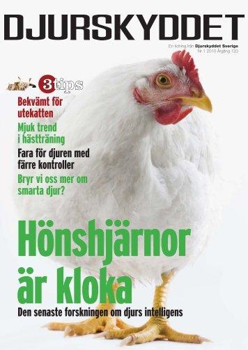 Djurens Intelligens - Djurskyddet Sverige