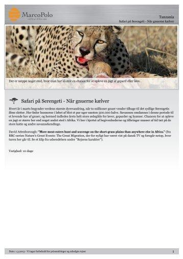 Safari på Serengeti - Når gnuerne kælver - MarcoPolo