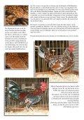 Porselein op eb, eWh of beide - Tuinvee - Page 5