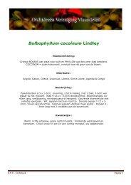 Bulbophyllum cocoinum Lindley