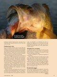 PDF-format - Till sportfiskebilder.se - Page 4