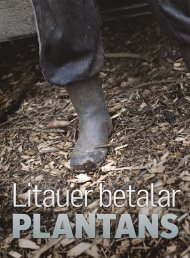 Litauer betalar plantans pris - Dagens Arbete