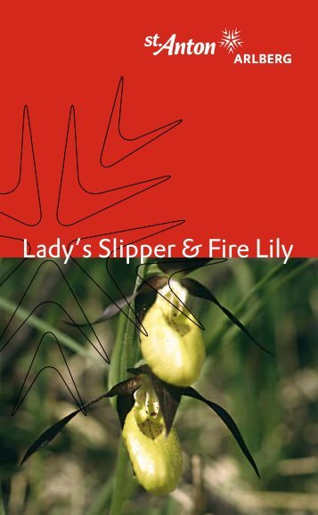 Lady's Slipper & Fire Lily