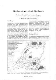 Libellennieuws uit de Biesbosch