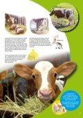 Djuren på gården - SLC - Page 5