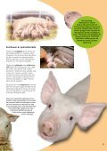 Djuren på gården - SLC - Page 7
